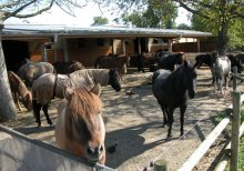 PERFO-AK reinforcement mats for horse paddock